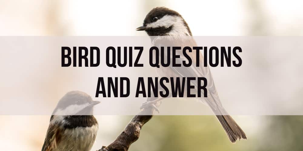 Bird Quiz Questions and Answers